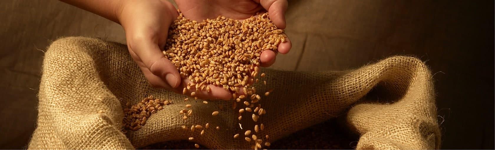 L'analyse du blé et de la farine